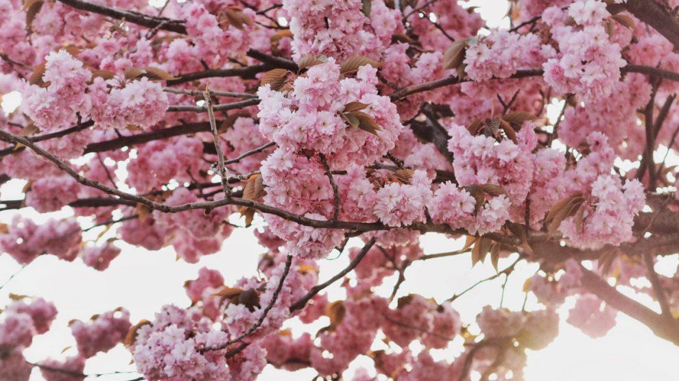 Frühlingsblüten begeistert von dir